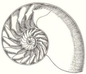 nautilus-e1332253871149